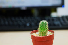 Cactus on office table. Cactus on wooden office table Royalty Free Stock Photo