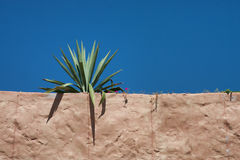 Cactus On Brown Stucco Building Royalty Free Stock Photos