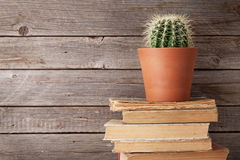 Free Cactus On Old Books Royalty Free Stock Image - 88060216