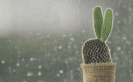 Free Cactus On Rainy Day Window Background Stock Photos - 103053873