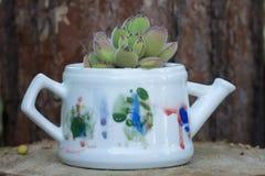 Cactus op bloempot Stock Fotografie