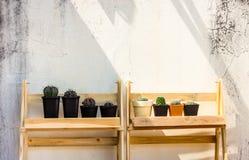 Cactus op de vloer, op witte achtergrond royalty-vrije stock afbeeldingen