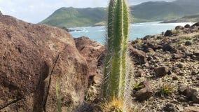 Cactus op een berg royalty-vrije stock foto's