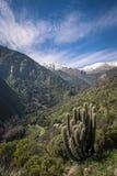 Cactus op een berglandschap Royalty-vrije Stock Foto's