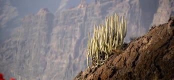 Cactus op een heuvel met bokeh op de achtergrond om de cactus te isoleren en de hoge hoogte en de schaal te demonstreren stock fotografie