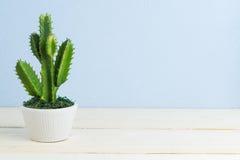 Cactus op houten lijst Royalty-vrije Stock Foto