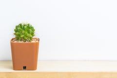 Cactus op houten lijst Royalty-vrije Stock Fotografie