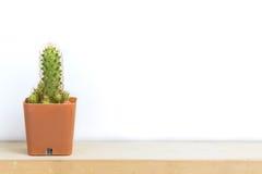 Cactus op houten lijst Stock Afbeelding