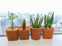 Cactus op wolkenkrabber Royalty-vrije Stock Foto