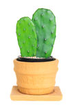 Cactus ( Opuntia ) on isolated background ( Cereus hexagonus Mil Royalty Free Stock Photography
