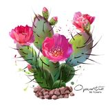 The Cactus Opuntia watercolor painting. White background Stock Illustration
