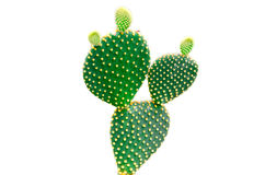 Cactus, opunzia Fotografia Stock Libera da Diritti