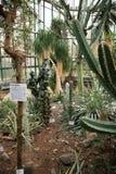 Cactus in orangery Stock Images