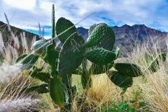Cactus original image libre de droits