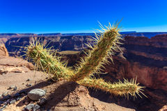 Cactus with out of focus Grand Canyon Stock Photo