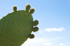 Cactus over blue sky Stock Image