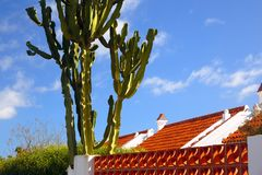 Cactus over roof Stock Images