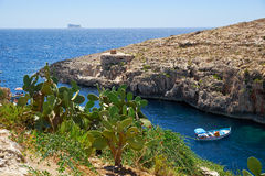 Cactus over water of Wied Zurrieq Fjord on south end of Malta is Stock Photography