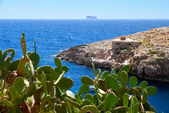 Cactus over water of Wied Zurrieq Fjord on south end of Malta is Royalty Free Stock Photo