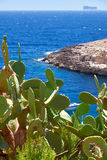 Cactus over water of Wied Zurrieq Fjord on south end of Malta is Royalty Free Stock Image