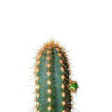 Cactus over white Stock Photos
