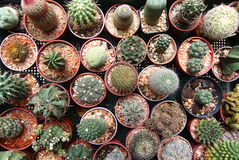 Cactus of overhead of essentials Royalty Free Stock Image