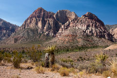 A cactus overlooking Red Rock Canyon in Nevada. Stock Image