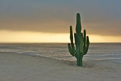 Cactus and the pacific ocean Royalty Free Stock Photo