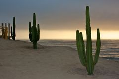 Cactus and the pacific ocean Stock Image