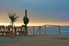 Cactus and the pacific ocean Royalty Free Stock Photography