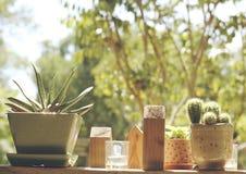 Cactus para el adornamiento casero Fotografía de archivo