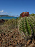 Cactus in Paradise Culebrita, Puerto Rico Royalty Free Stock Images