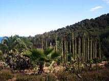 Cactus park, Barselona. In Spain Stock Images