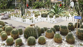 Cactus in the park,chengdu,china Stock Image