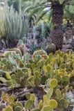 Cactus Park - Gran Canaria Stock Photography
