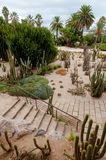 Cactus Park at Montjuic hill at Barcelona. Cactus Park at Montjuic hill vertical view at Barcelona in Spain Stock Image