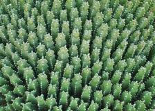 Cactus pattern stock image