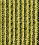 Cactus Pattern Stock Photography