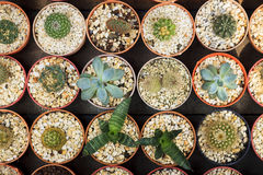 Cactus. The pattern of nature royalty free stock image