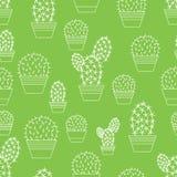 Cactus pattern Stock Photos