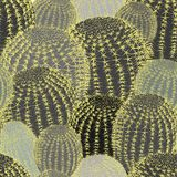 Cactus plants texture seamless pattern background stock photos