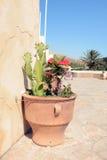 Cactus peu commun dans le monastère de Preveli Crète, Grèce photo libre de droits