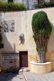 Cactus peu commun dans le monastère de Preveli Crète, Grèce photographie stock