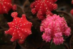 Cactus piantato in un giardino, fotografia stock libera da diritti