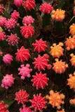Cactus piantato in un giardino, fotografie stock libere da diritti