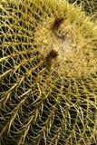 Cactus piantato in un giardino, fotografie stock