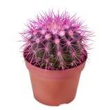 Cactus piantato in un vaso di fiore Immagini Stock Libere da Diritti