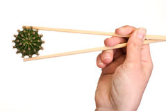 Cactus picked up by chopsticks Royalty Free Stock Images