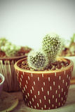 Cactus. Picture that be post-processed into vintage style picture Stock Image