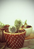 Cactus. Picture that be post-processed into vintage style picture Royalty Free Stock Photo